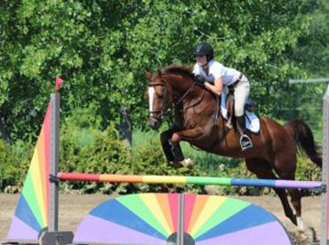 achat-location-chevaux-03