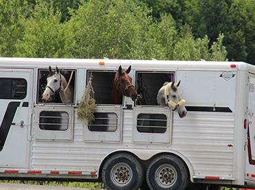 achat-location-chevaux