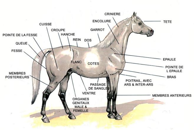 Clinique de Formation 1 @ Centre Equestre des Mille-Iles